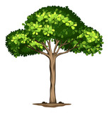 An idolated tree on white background - 248577257