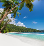 Beautiful sandy beach with coconut palm trees and turquoise sea.