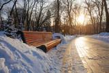 Alley in park  in winter time taken in Kyiv, Ukraine