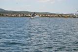 oiseau mouette marin