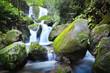 waterfall in florest  - 248591676