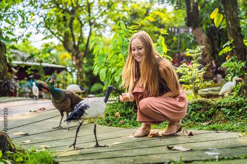 Leinwandbild Motiv Young woman feeding an African Sacred ibis