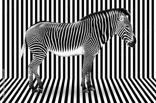 Surreal zebra on black and white striped background - 248625611