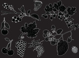 set of berry fruits outlines isolated on black