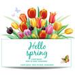 Arrangement with multicolor tulips flowers