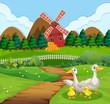 Duck family at farmland