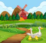 Duck family at farmland - 248638098