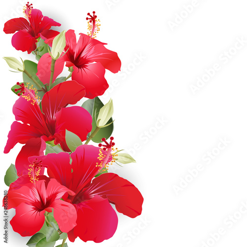 Bouquet with hibiscus - 248638280