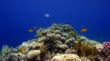The ocean and the corals. Colorful tropical fish. - 248642413