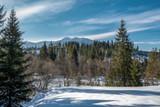 Fototapeta  - Górskie szczyty za świerkami © Kamil_k2p