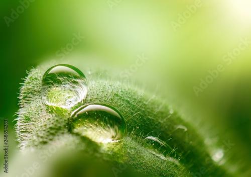 Leinwanddruck Bild Macro dew drops on a leaf close-up