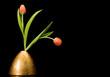 Two tulips in golden vase on black background - 248671803