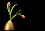 Fototapeta Tulipany - Two tulips in golden vase on black background © eyewave