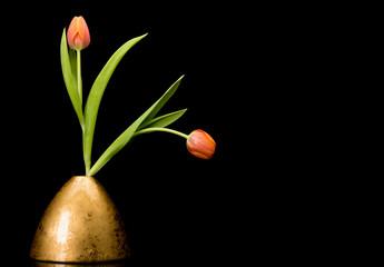 Two tulips in golden vase on black background