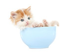 Cute kitten in bowl isolated on white background