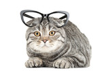 Cute cat with glasses isolated on white background - 248685626