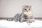 Cute cat lying on white carpet