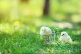 Little chicks in shopping cart on green grass - 248686250