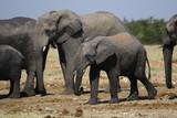 Elephant Africa - 248689860
