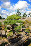 Bonsai displayed on an outdoor bench
