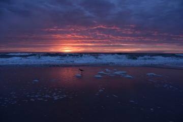 Bird on Beach during purple sunrise © Lee