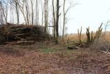 Brennholz liegt im Wald
