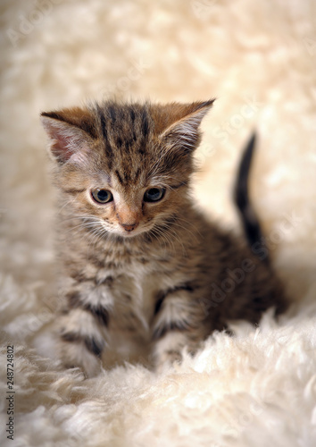 Leinwanddruck Bild cute striped kitten on a light background