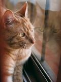 gato rubio en ventana - 248737418