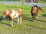 KON   HORSE