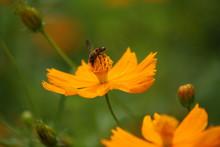 "Постер, картина, фотообои ""bees suck honey over flowers"""