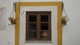 Window with flowers and a creepy doll - 248765039