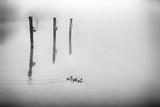 Olympia Bird Mist - 248773887