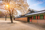 Gyeongbokgung palace with cherry blossom tree in spring time in seoul city of korea, south korea. - 248834052
