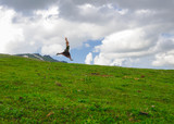 ragazza felice salta in montagna libertà felicità