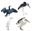 four birds set isolated on white