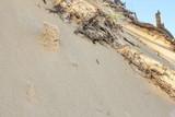 Coastal dunes in Australia - 248871033