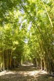 Fototapeta Bambus - bambual © Art by Pixel