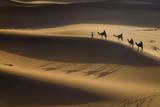 Camel caravan in desert - 248878089