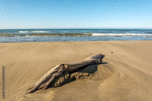 Bois flotté sur une plage en Camargue © bios48