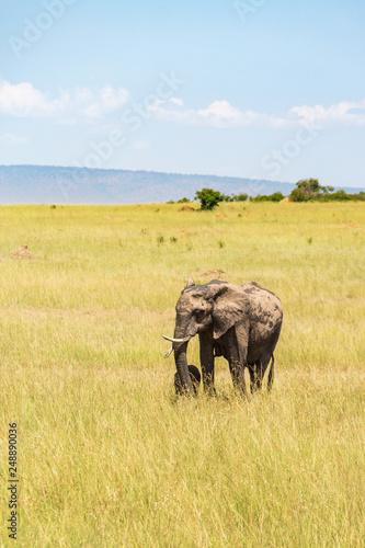 Elephants mother with a newborn calf © Lars Johansson