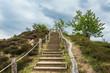 Leinwanddruck Bild - Landschaft mit Bäumen und Felsen im Harz