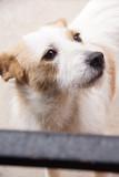 Cachorro perro callejero  - 248921035
