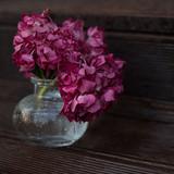dark pink hydrangea in a vase on a brown background under raindrops