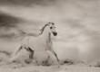 Beautiful white stallion - 248927427
