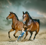 Bay sportive horse running wild