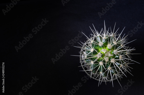 A small cactus on a black background is photographed from above, wallpaper