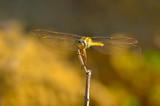 Macro shots, Beautiful nature scene dragonfly.  - 248945051