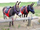 Turismo en burro - 248952034