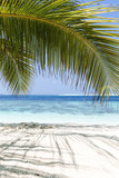 Coconut palm with sea view - 248962421