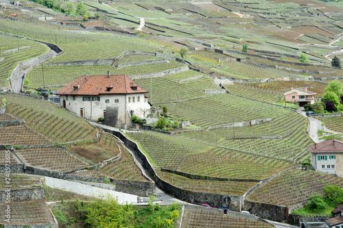 Foto Murales landschaft in der schweiz